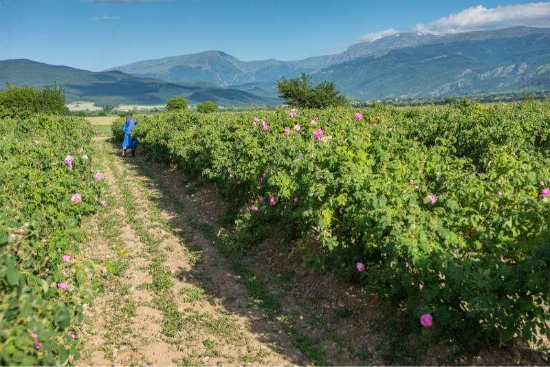 valle-rosas-plovdiv-bulgaria